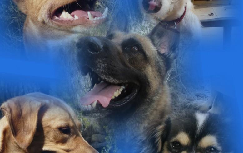 Сотрудничество Grupo VAPF с локальной ассоциацией AKIRA Benissa Dog Sanctuary.